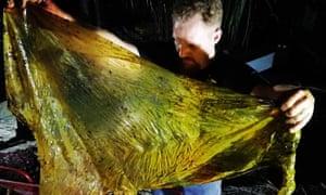 plastic in dead whale guardian