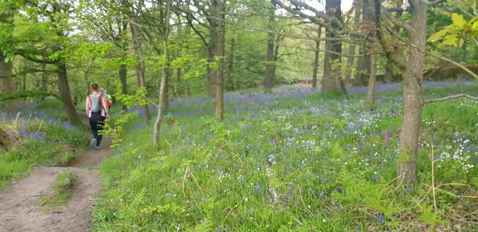 RW bluebell woods