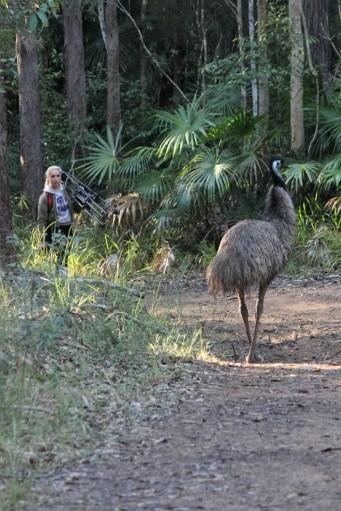 fluffy lead emu nambour parkrun