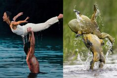 frog lift