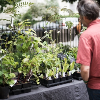plants-at-the-festival