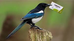 dont be a token magpie