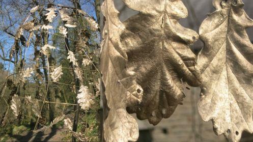 Sarah Cook bronze oak leaves