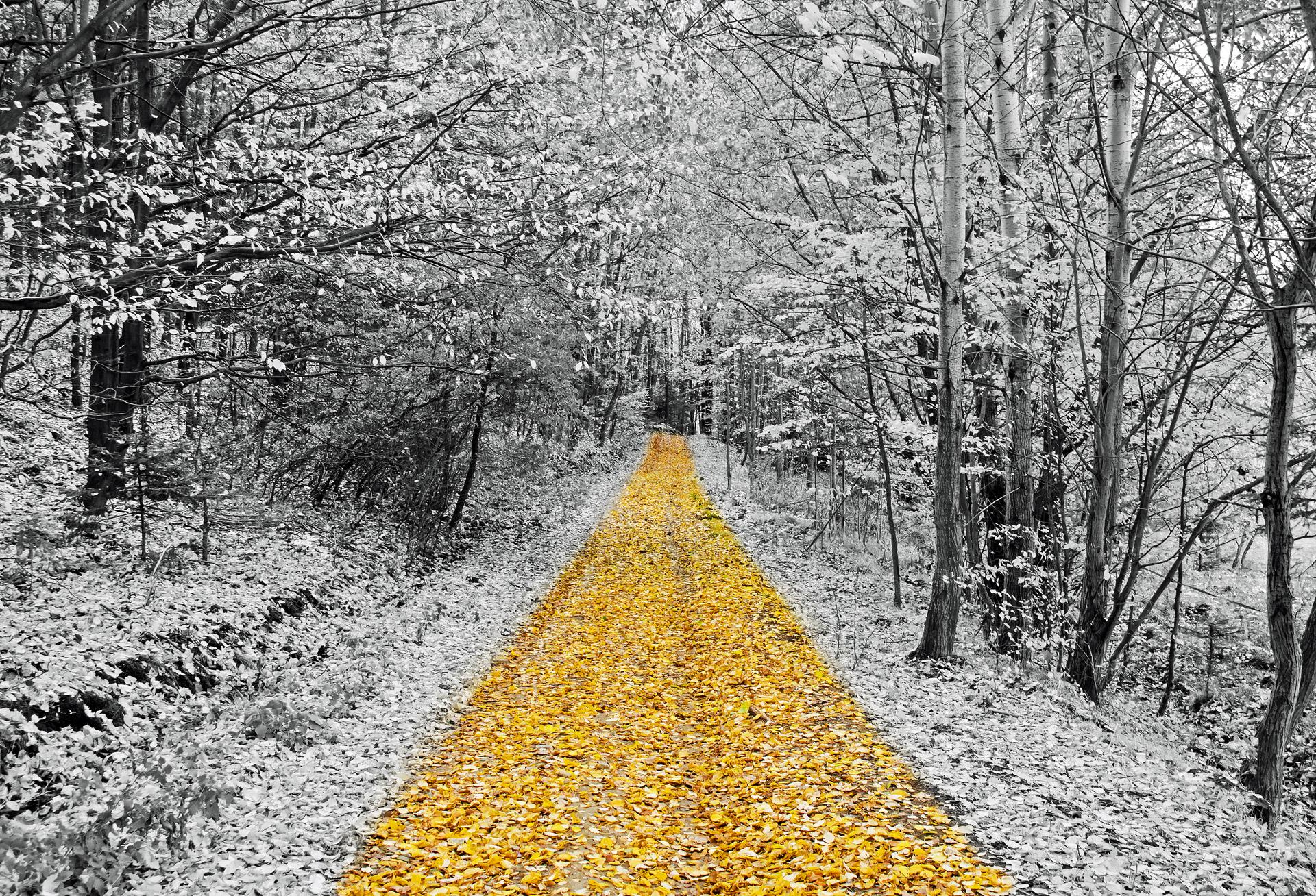 gold-footpath.jpg