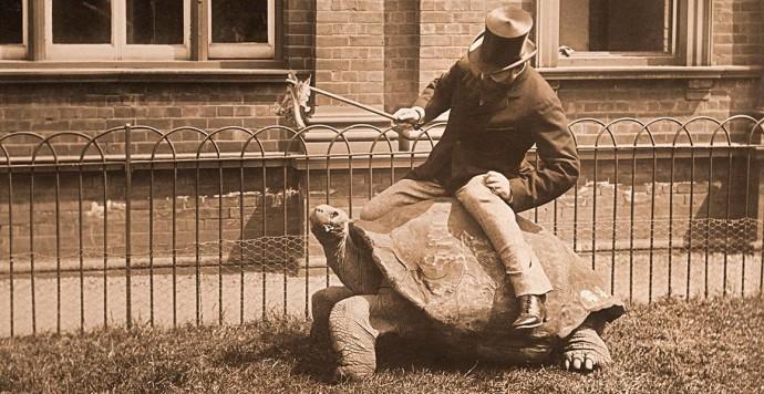 walter-rothschild-astride-tortoise-tring-full-width.jpg.thumb.1920.1920
