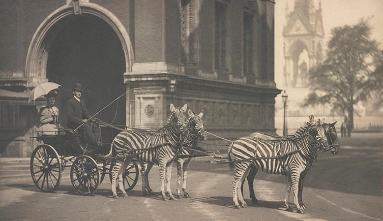 zebra-trap-outside-albert-hall-two-column.jpg.thumb.768.768.png