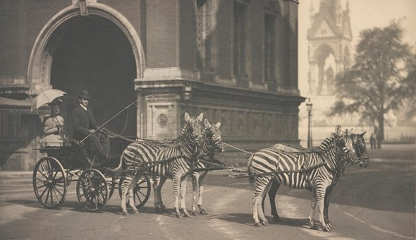 zebra-trap-outside-albert-hall-two-column.jpg.thumb.768.768.png